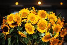 sunflower / Sonnenblumen