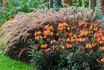 Fleurs de jardin Printemps/été / Au printemps, admirez les plantes bisannuelles en fleurs. Et tout l'été, laissez-vous embarquer au jardin par les couleurs éclatantes des annuelles !