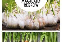 22 food scraps that regrow
