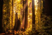 Redwoods / by YUP