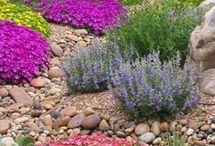 Water wise gardens