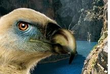 """ARRIBES DEL DUERO / CRUCERO AMBIENTAL por el tramo vertical más espectacular del Parque Natural de Arribes del Duero y Douro Internacional, desde la ciudad de Miranda, hasta el Paso de los Contrabandistas con desembarque en el Valle del Águila y regreso. Durante el recorrido, los técnicos de la EBI, interpretarán la geología, fauna, flora y recursos etnográficos de este """"Grand Canyon"""" europeo y sus proyectos hispano-lusos de recuperación medioambiental en aguas internacionales."""