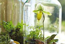 Jam jar garden