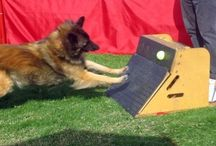 Chesney's Board / Things for dogs
