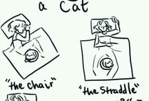 The crazy world of cats