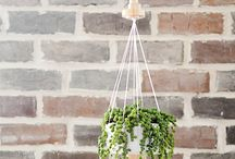 Home - Planters/Hanging Pants