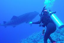 Palau / Scuba Diving in Palau