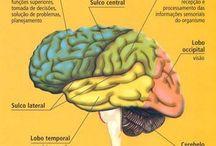 Neurociência e Neurofisiologia