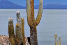 Bolivie / by Corinne Breton