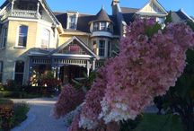 The Idlewyld in bloom. / Idlewyld Inn & Spa is a garden oasis.  / by Idlewyld Inn & Spa