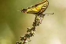 Insects/Butterflies