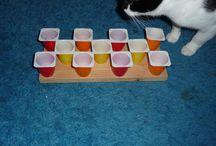 Katzenbeschäftigung