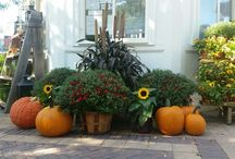 Mums the word / There are so many great planting ideas for mums!
