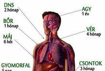 emberi szervezet