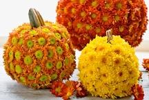 Autumn Colors / by Susan Estelle