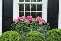Gardening:  Windowboxes