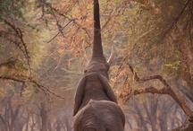 animals / by Vanessa Mae