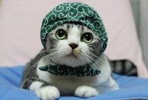 猫コスプレ / 猫たちのコスプレ集