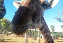 Zoo-Safari- Fasano