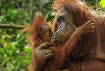 borneo-/orangutan-bamboo-rafting-4d-3n