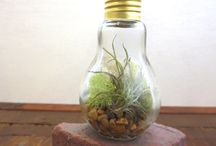 Light bulb terrariums / Amazing tiny creations in lightbulbs with living elements like plants & moss.