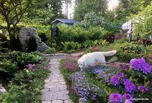 Our garden summer 2017