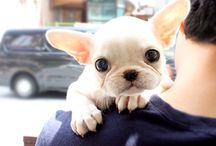Dogs / They are sooooooo cuteeee