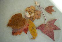 fall / by Jennifer Wemple