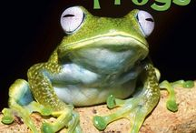 2015 Frogs Calendar / by MegaCalendars.com