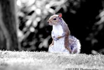 Animals and Nature / Wild animals and nature pictures by PJL Photography