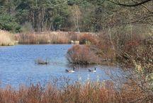 Natuurpoort Malpie / Natuurreservaat De Malpie en de Malpiebergse Heide zijn dé trots van Valkenswaard. Het reservaat herbergt vele grote en kleine vennen in een landschap waarin bosgebied overgaat in heidevelden en andersom. U kunt er prachtig wandelen en er loopt een mooi aangelegd fietspad doorheen. Op de rivier de Dommel wordt in de zomer veel gekanood.