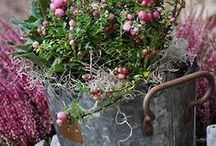 cottage garden / These are inspiration for my new garden