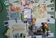 2013 Vet Clinic decorating contest (Eastern Canada) / In recognition of #Pet Health Insurance Month (September), Petsecure asked #vet clinics across #Canada to #decorate their clinics and send in photos for a chance to win! Here are some of the great submissions we received from Eastern Canada.