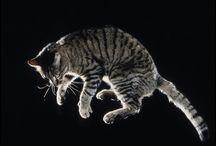 caindo de 4 gato