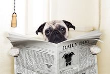 Dog Training Tips / Learn what makes your dog tick and make sure they are on their best behavior.