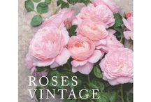 roses anciennes et parfumées de la beauté de leurs formes à la douceur de leurs parfums