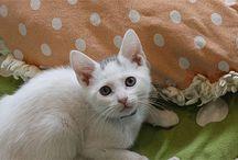 Adopt Kittie