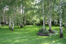 brzozowe ogrody