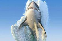 mundo acuático, foto espectacular.