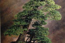 Bonsai / Baum
