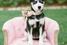 Precious Wedding Pets / Pets are a part of the family and including them in your special day is truly sweet.