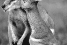 Cute Animals / by Sandra Ford Tucker