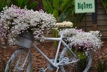 bici e fiori