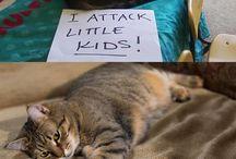 Feline stuff