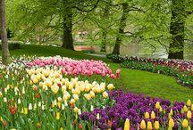 Flowerpower Tulpen