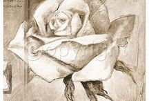 Flowers...Roses