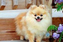 söt hund