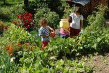 Piccoli Campi Verdi / Orti in affitto, consigli e servizi per avviare un tuo orto Bio tutto tuo!