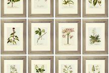 roślinki julka