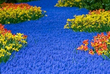 Flowers N Decor / by Brenda Forbes
